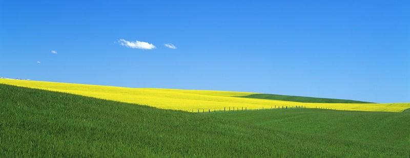 Pasture blue sky