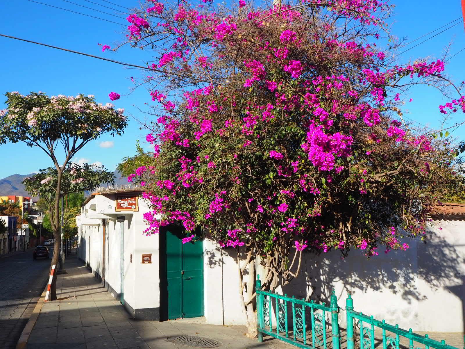 Working in Oaxaca Image Relay